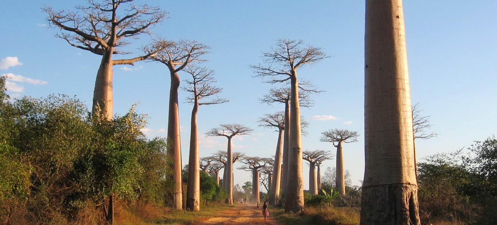 Madagascar Ifaty Baobabs