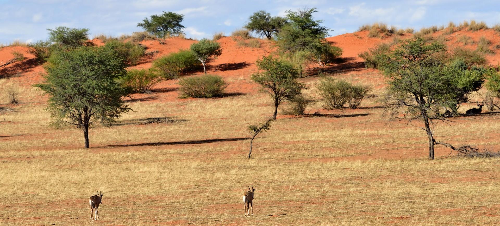 Namibie Etosha Antilopes