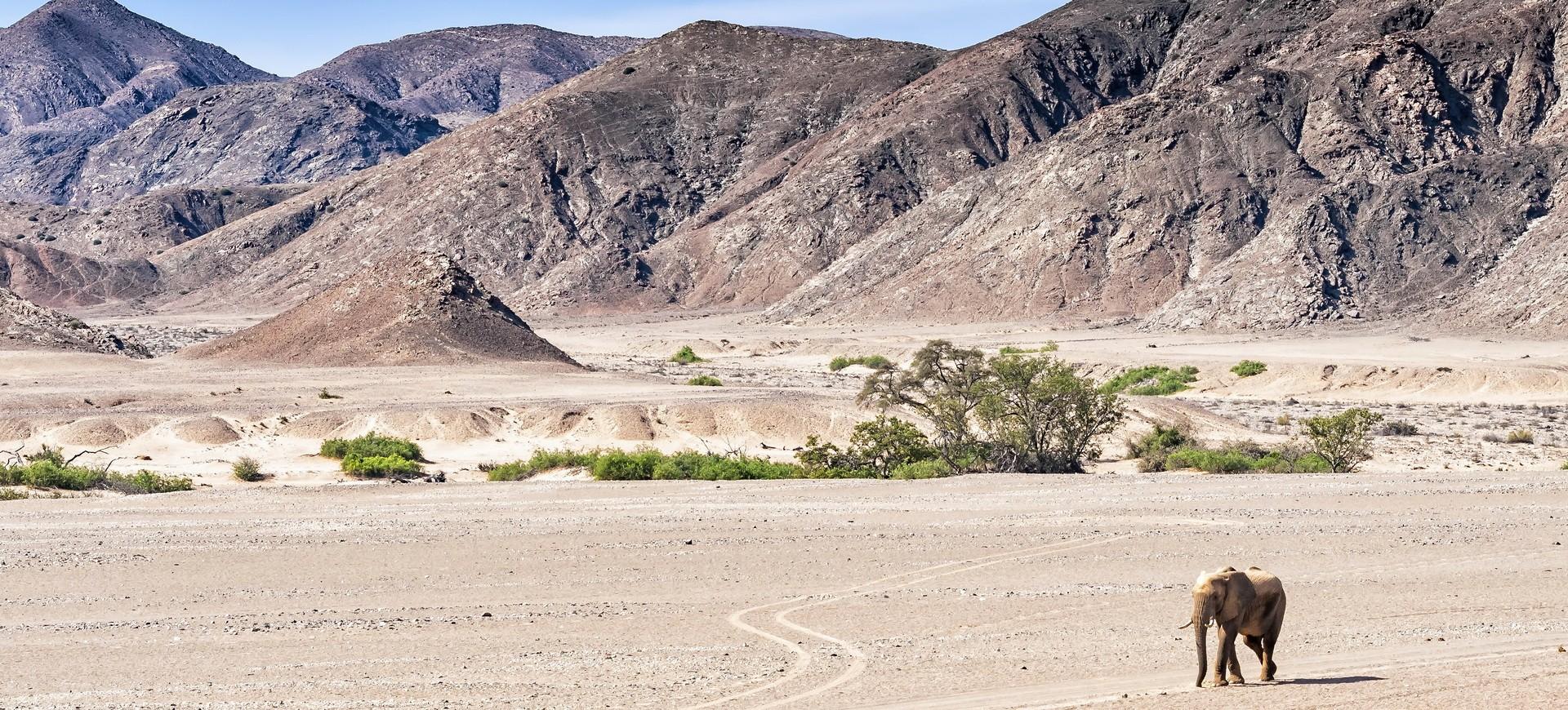 Namibie Damaraland Kunene Eléphant sauvage du désert
