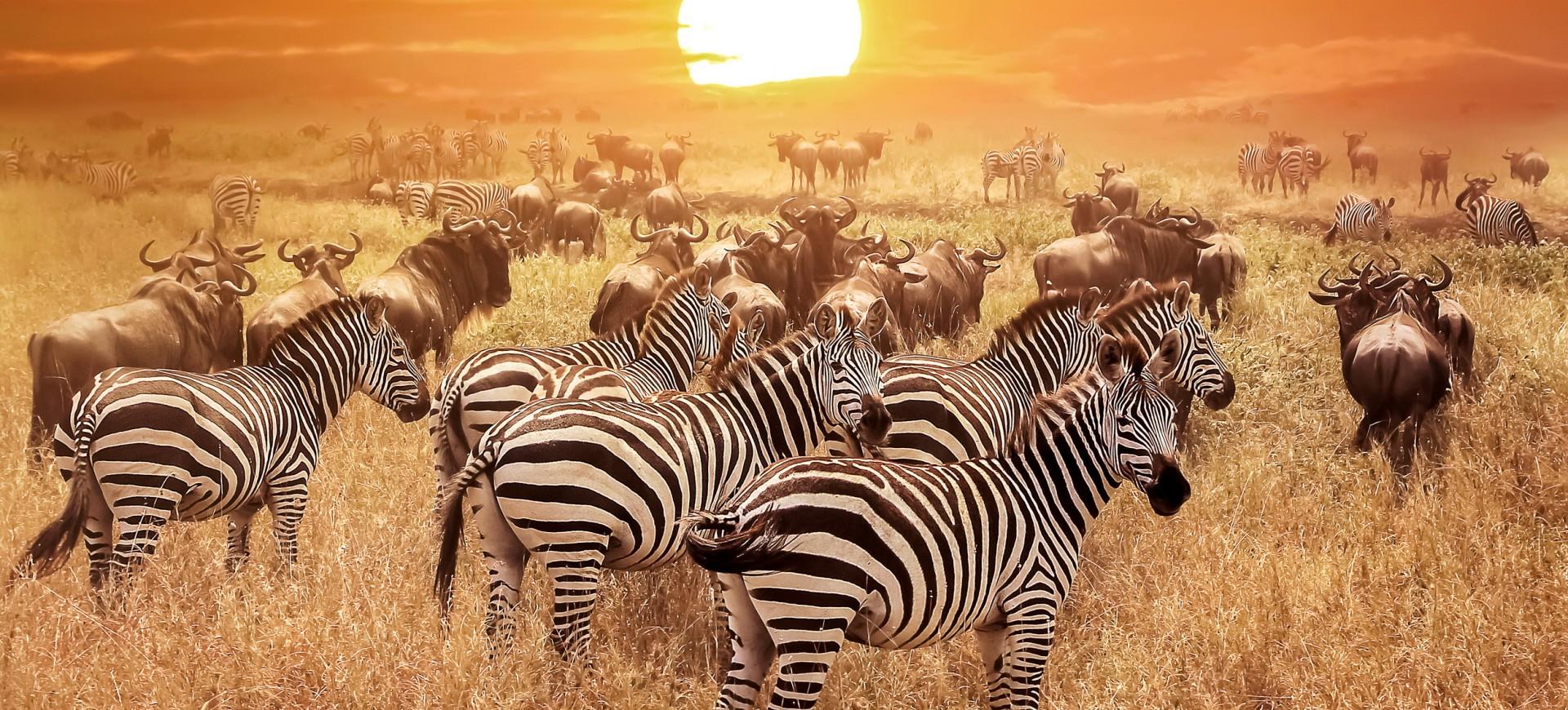 Nos voyages et séjours en Afrique