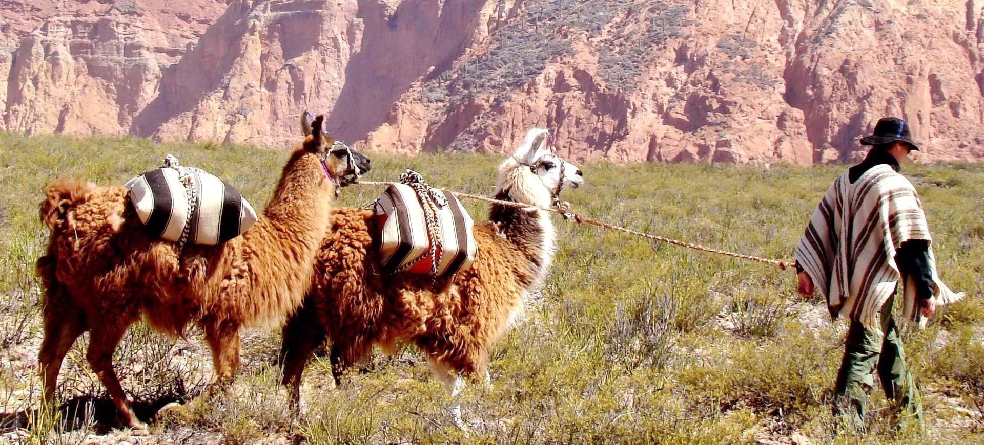 Nos voyages et séjours en Amérique du Sud