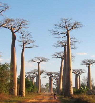 Nos voyages à Madagascar