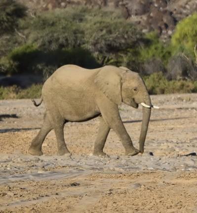 Nos voyages en Namibie
