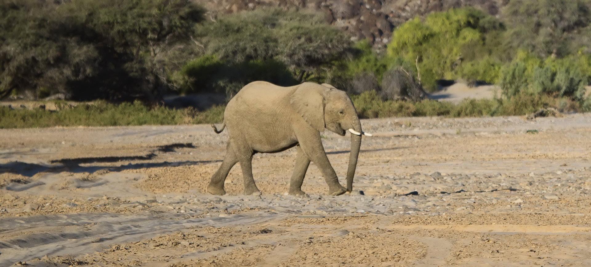 Conseils pratiques pour un voyage en Namibie